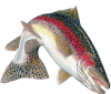Fishing Reports Rainbow Trout Icon