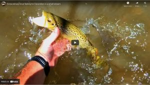 Rainbow Trout Fishing Reports Rainbow Trout Fishing Reports