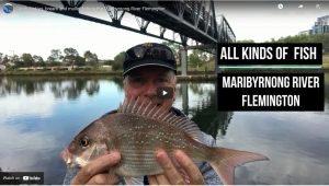 Snapper Fishing Reports